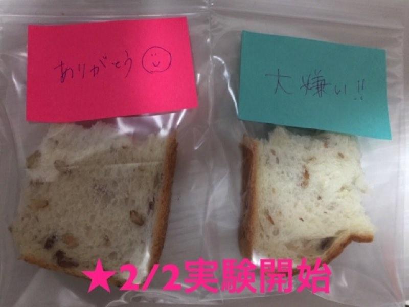 付箋を貼ったパンの実験